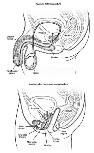 mężczyźni stojący penis jak szybko rośnie siusiak